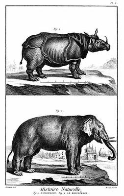 Ilustração Enciclopedia_Rinoceronte e Elefante